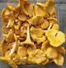 Skogens gula guld